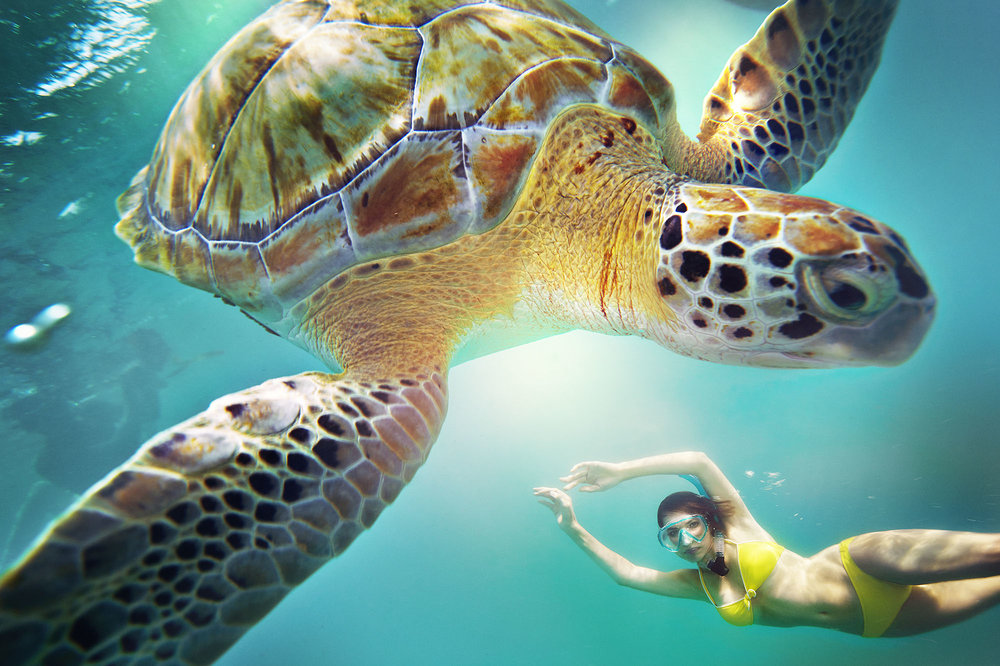 Karan Kapoor swimming with turtle