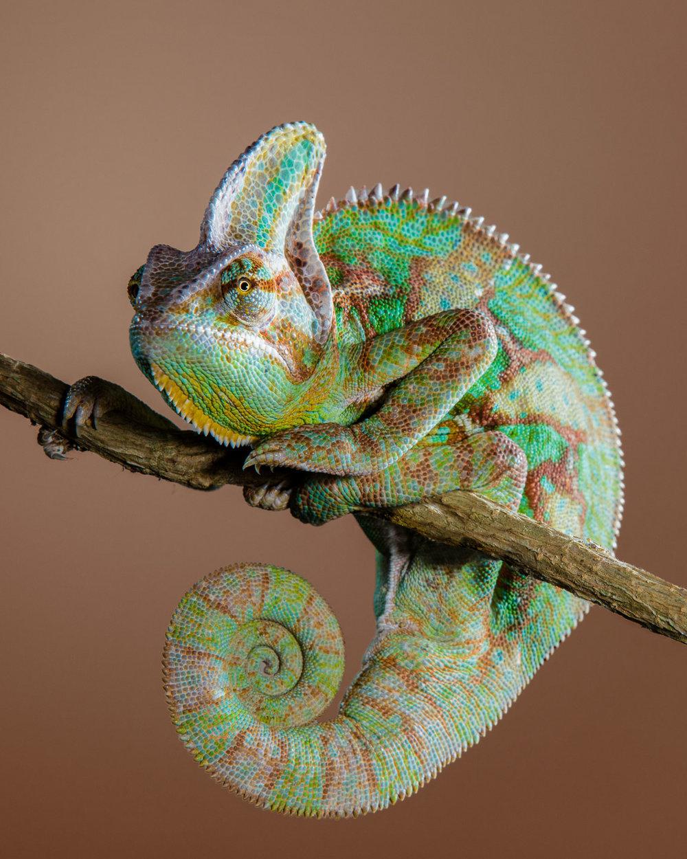 Tim Platt - Chameleon