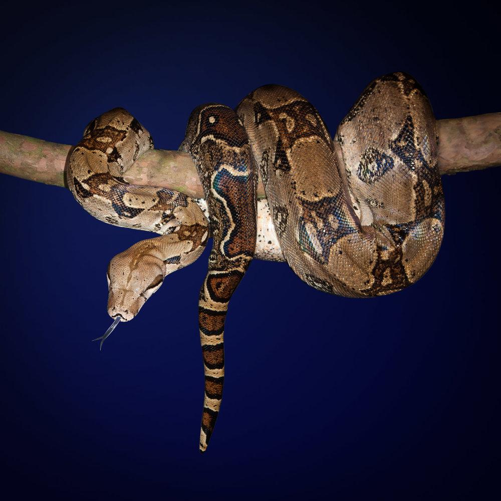 Tim Platt - Snake