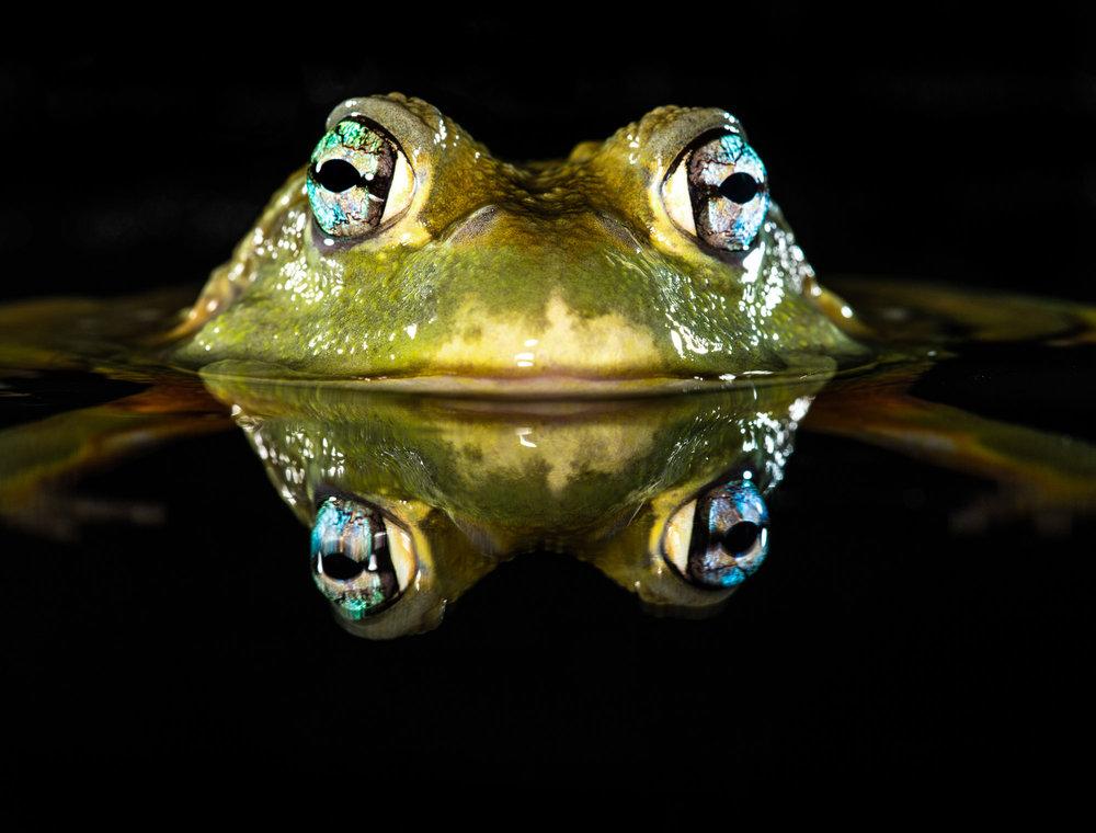 Tim Platt - Toad