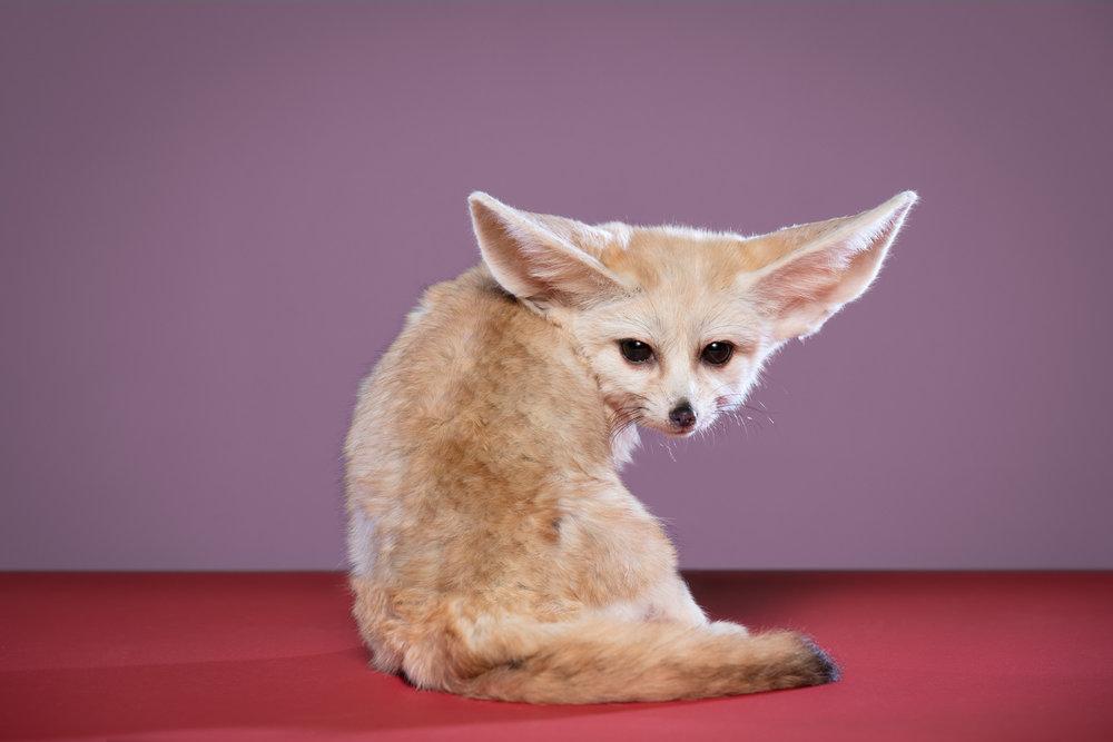 Tim Platt - wild cat