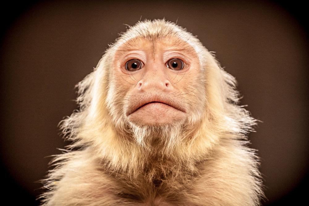 Tim Platt - Monkey