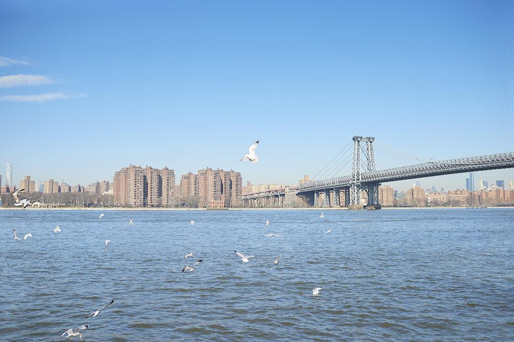 Dee Ramadan - bridge