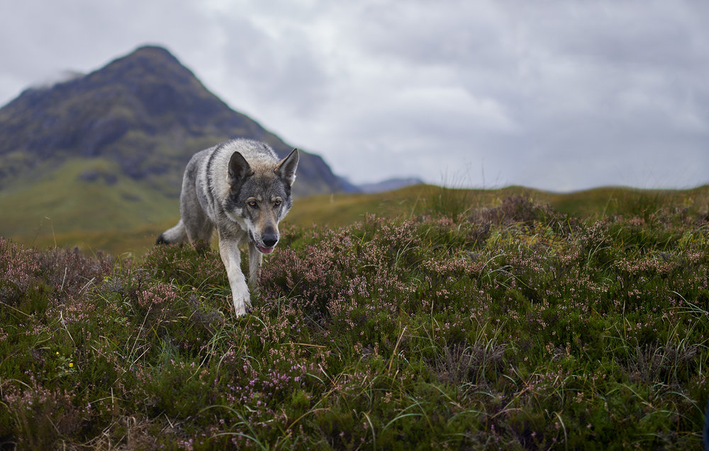 Dee Ramadan - landscape view of highlands with dog