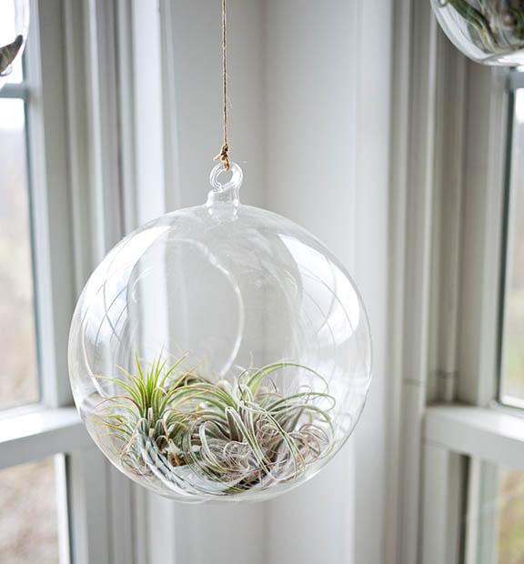 plants-air.jpg