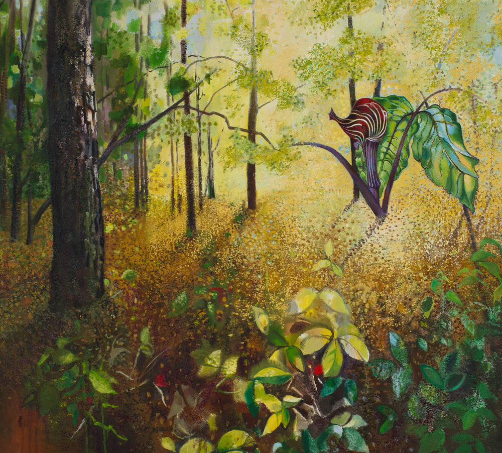 "Painting by Adele Wayman: ""Jack in the Pulpit, Sunny Woods,"" oil stick and oils on canvas, 34 x 37 ½ inches, 2013   ©"