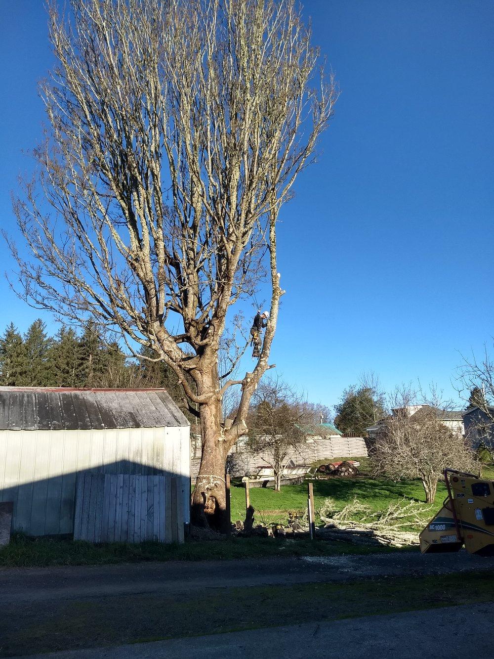 Pruning -