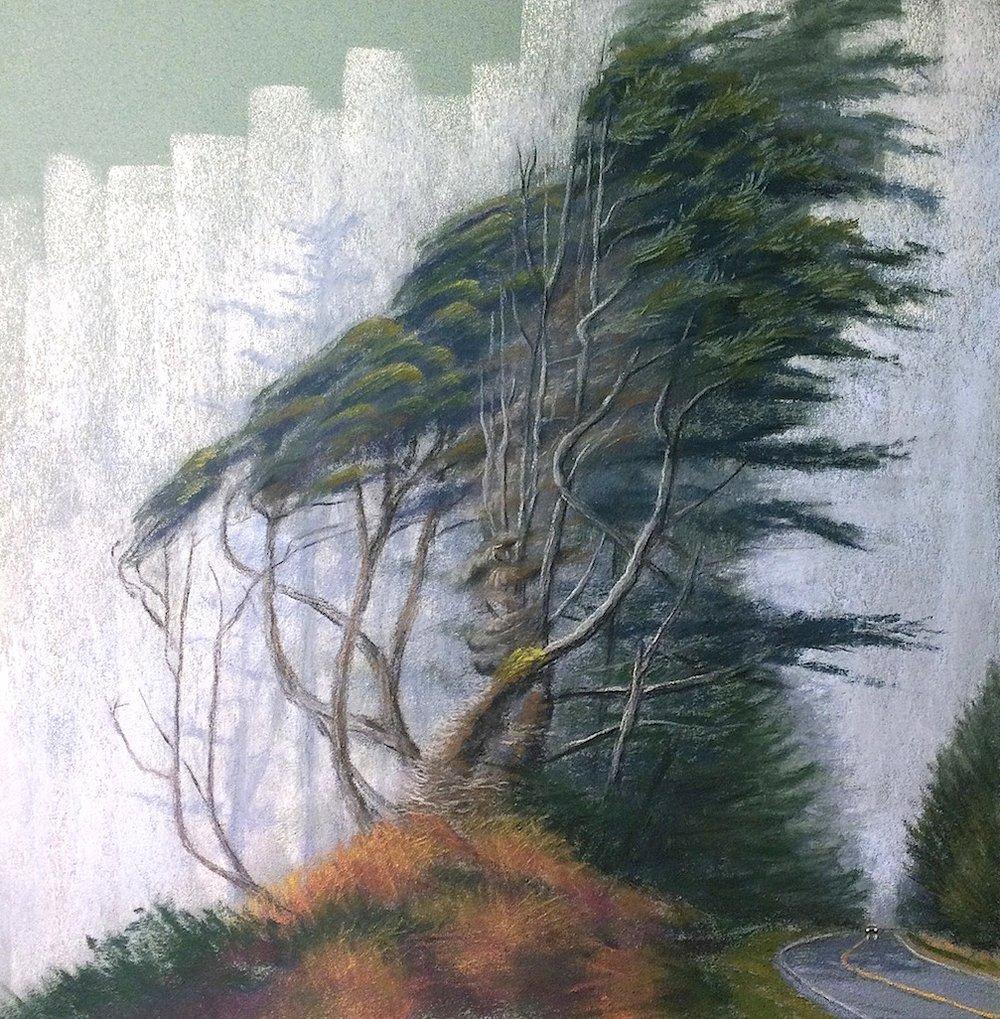 West Coast Cypress in Fog. Oregon
