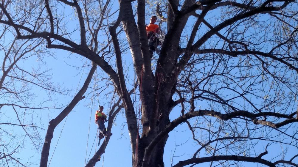 expert-tree-pruning.JPG