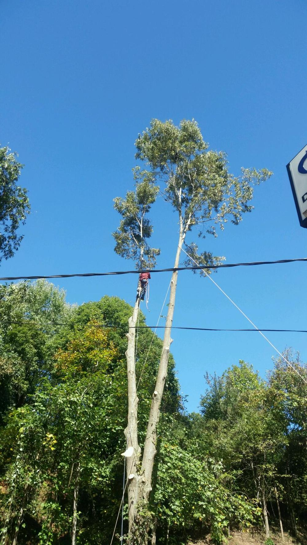 dangerous-tree-removal.JPG