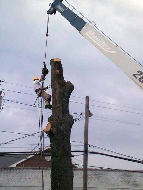 tree-removal-crane-truck.jpg