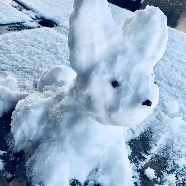 Having grown up in Florida, and never playing in snow as a kid, Joy started making up for lost time by creating this snow bunny out on the deck table! ❄️🐰