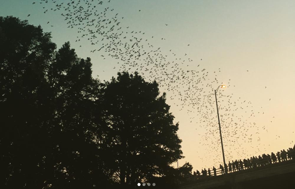 Congress Bridge Bats.png