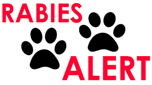 rabies.png