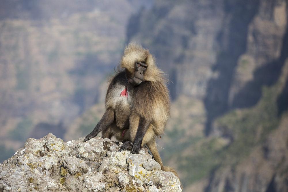 Simien Mountains National Park, Adobe Stock Photo