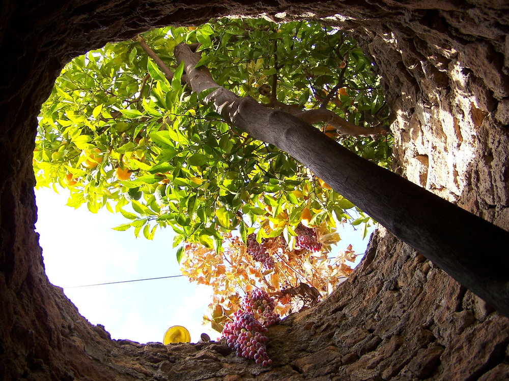 Tree skylight.JPG