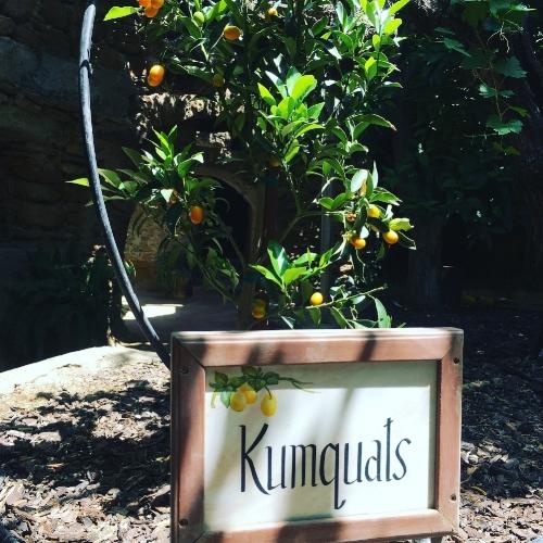 Kumquat Tree Forestiere Underground Gardens