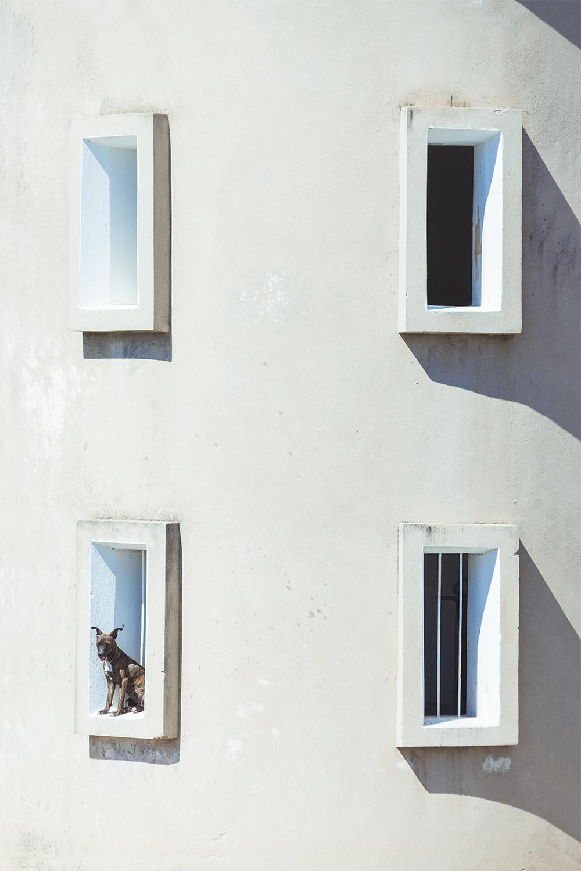 Four windows and a dog