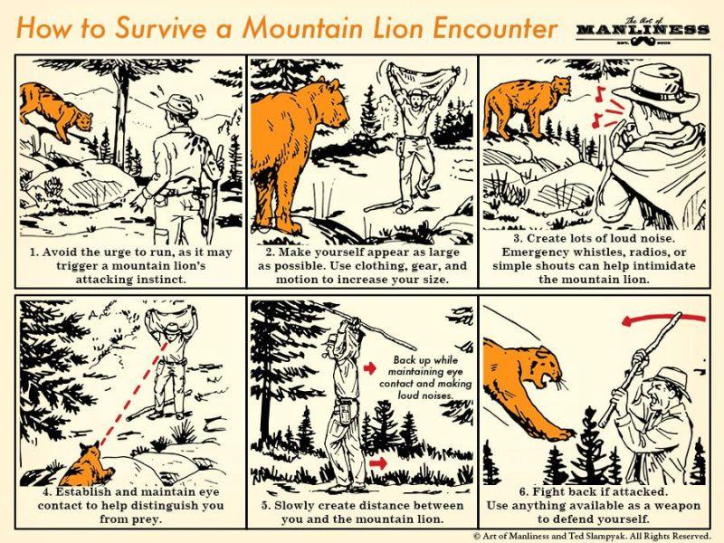 mtn lion poster.jpg