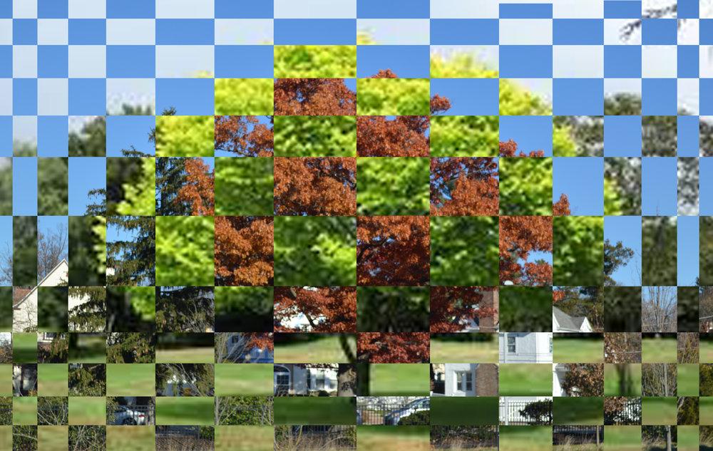 tree woven.jpg
