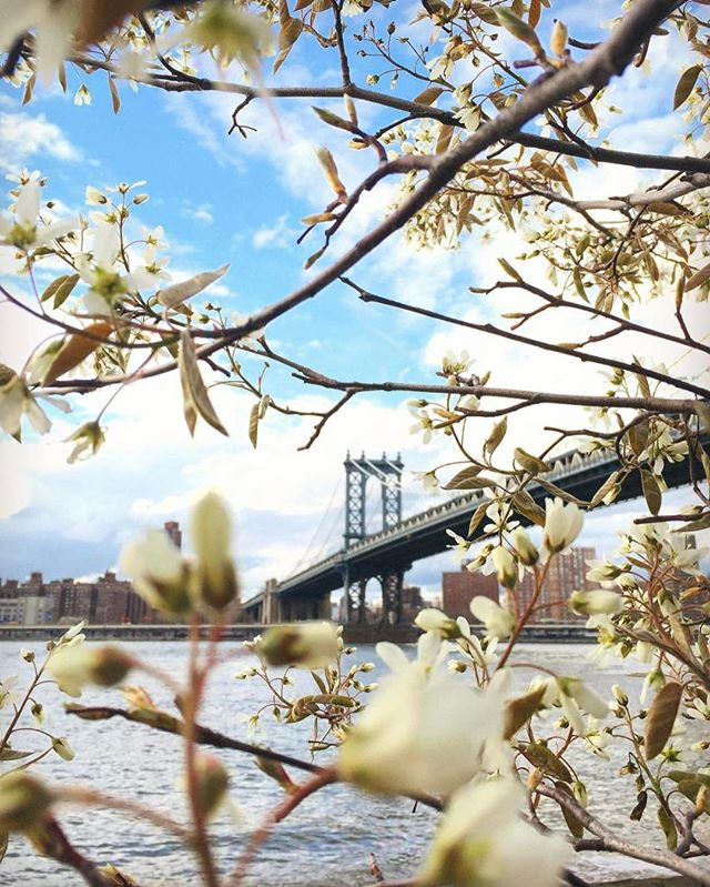 April showers bring May flowers 🌸⠀ 📸: @NewYorkCity