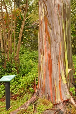 Botanical Gardens: There are several on the island of Oahu.Ho`omaluhia Botanical Garden is the closest, just a short eight mile drive away.