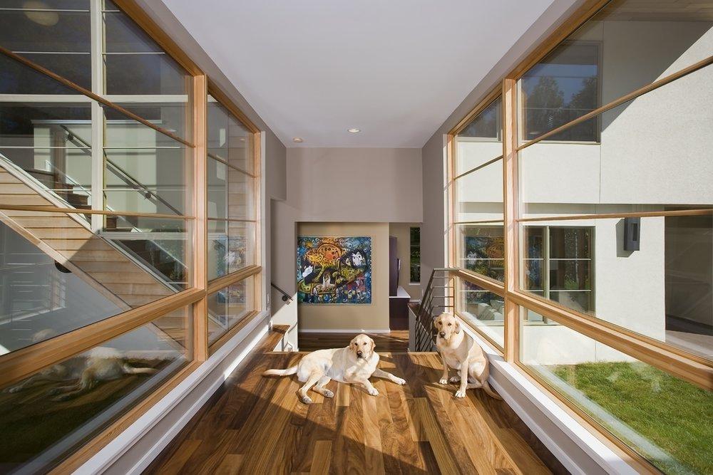 Hallway_Dogs.jpg