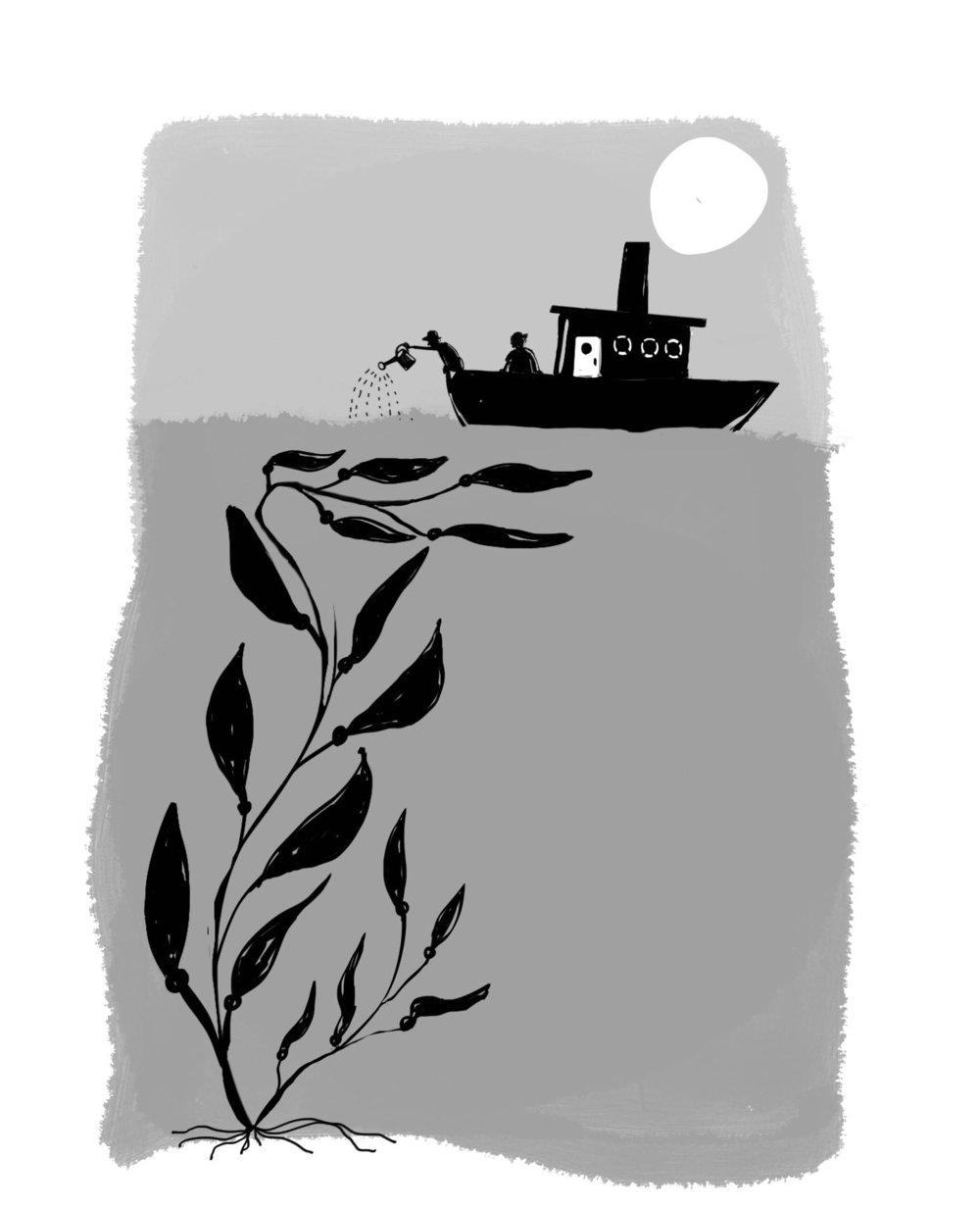 Kelp Farming for  Luke's Lobster