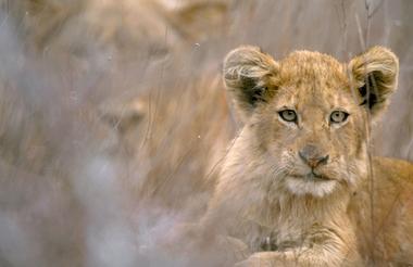 Kruger 3.jpg