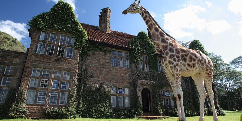 giraffe-manor.jpg.800x400_default.jpg