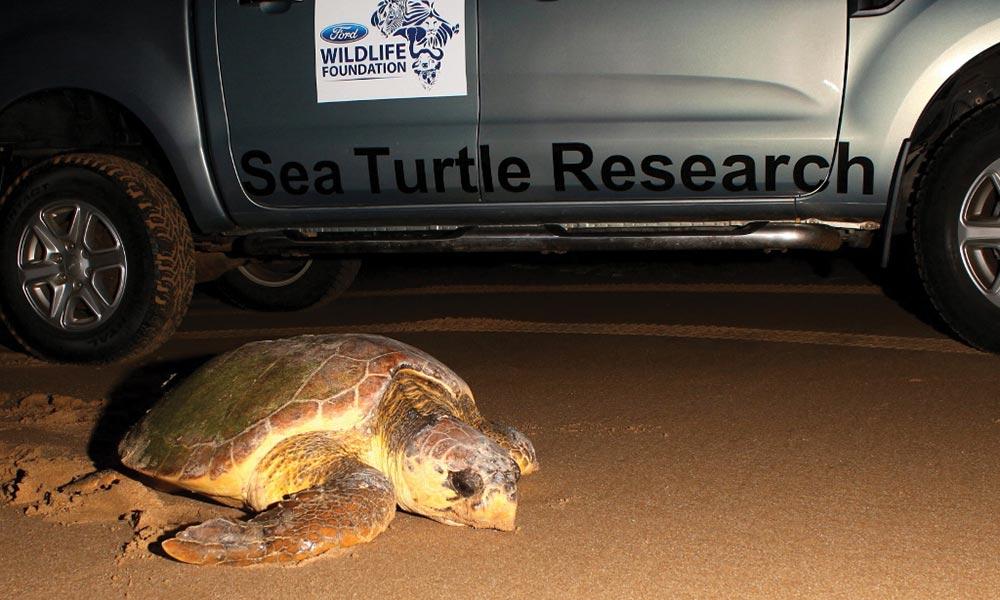 Turtles-in-Mozambique_03.jpg
