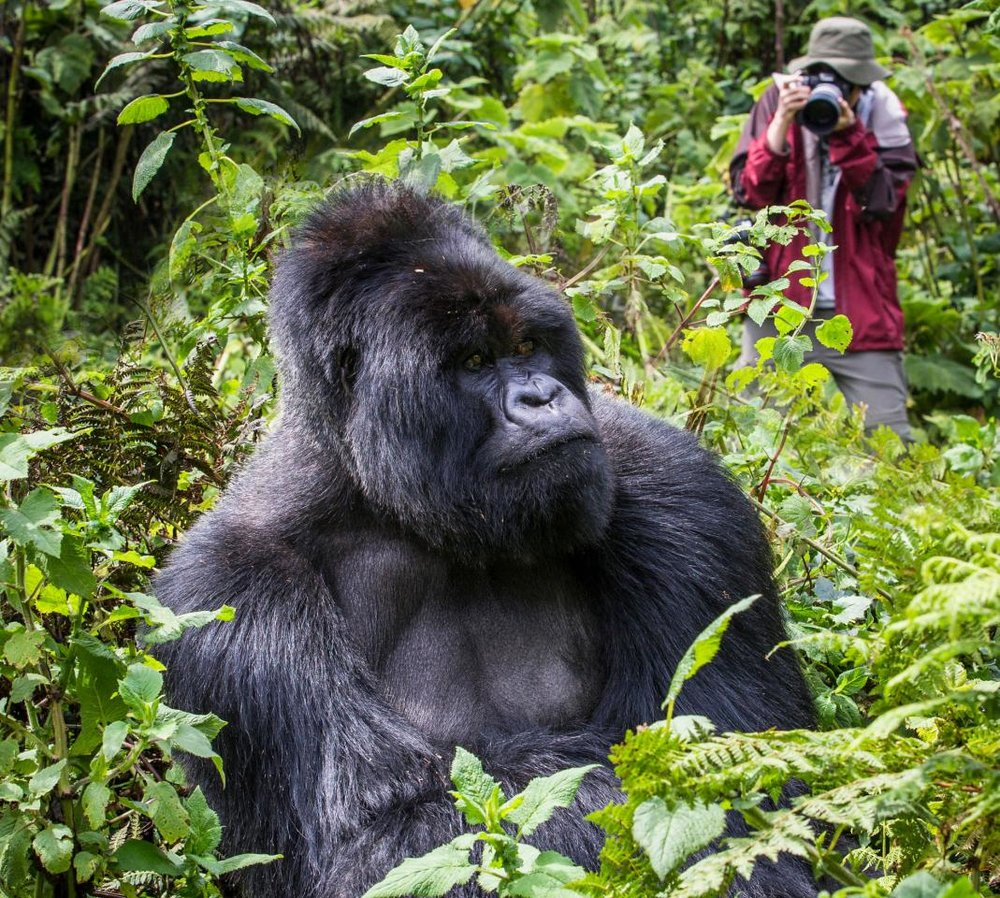 Copy of Copy of Day 9-12: Gorilla Project Mountain expedition