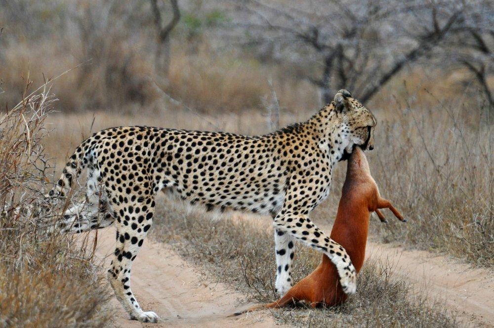 Copy of Copy of Day 3: Walking Safari & Adventure drive Safari