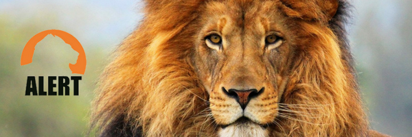 Lion+Project+Alert-2.png