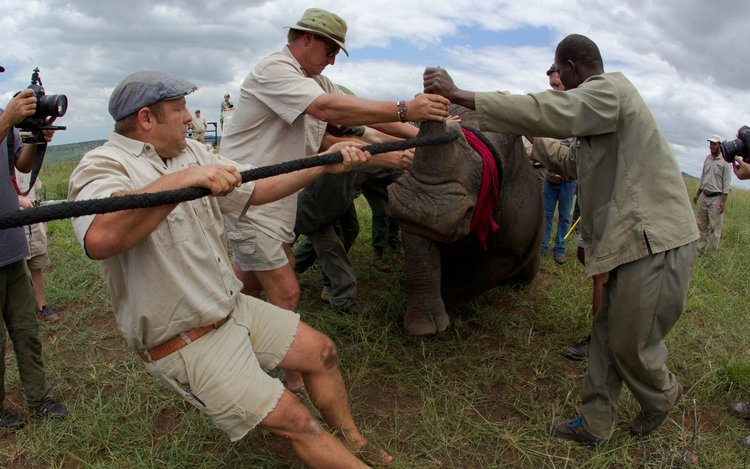 care-of-the-wildlife-rhinos-without-borders4-2.jpg