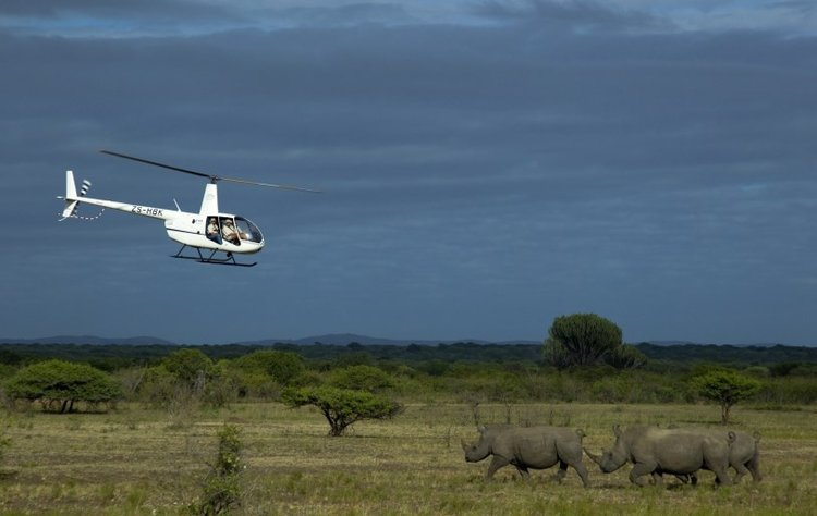Rhinos_Without_Borders_Feb_2015_CBS5953_Beverly-Joubert1.jpg