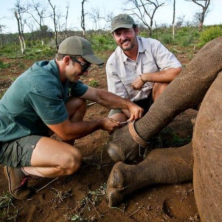care-of-the-wildlife-rhino-notching.jpg.454x454_96_0_3782.jpg
