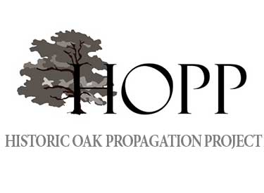 "The propagation project started as a way to ""preserve and regenerate"" Oak Park's ""historic"" oak trees. For more information on adopting an oak,    email  or visit  www.openlands.org ."