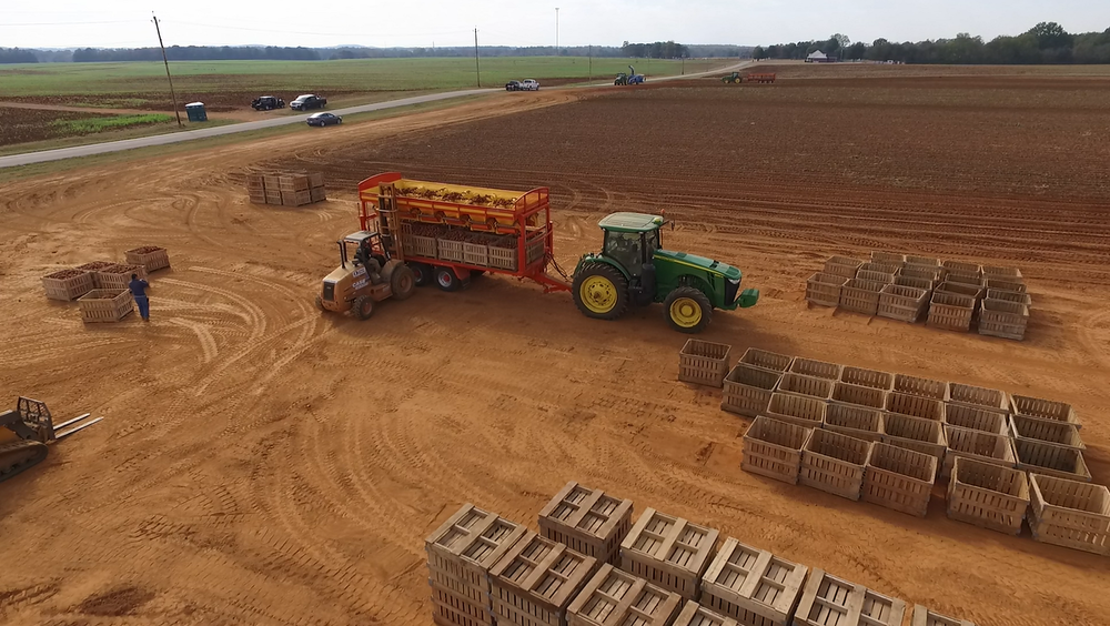 Unloading a Guardian Box Filler trailer at Bragg Farms in October 2016.