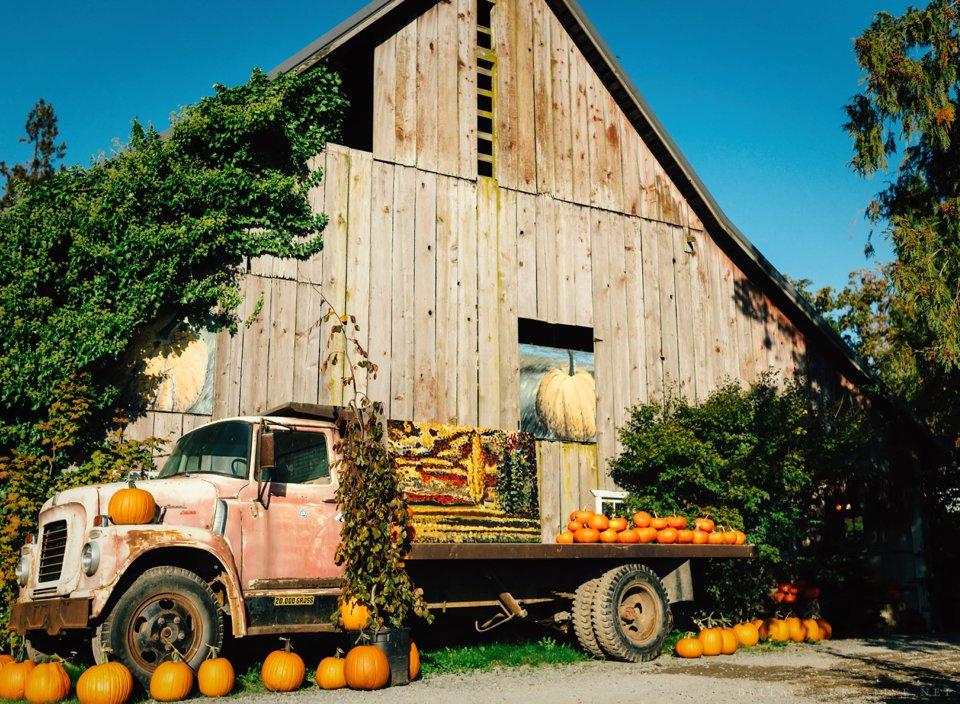 Gordon-Skagit-Farms-Mount-Vernon-Washington-Family-Session-Bella-Vita-Creative_0012.jpg