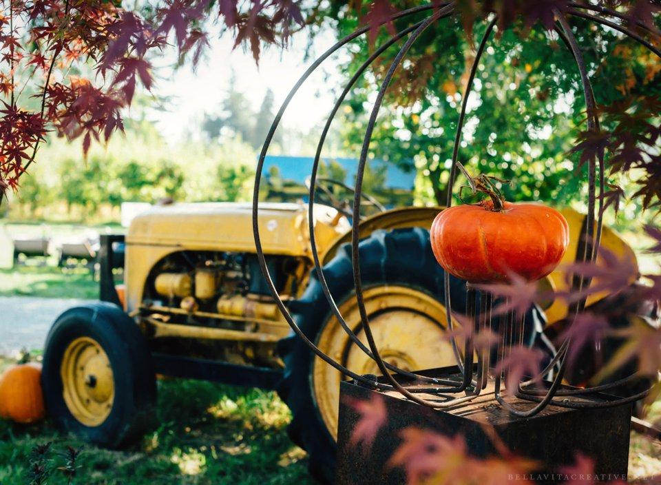 Gordon-Skagit-Farms-Mount-Vernon-Washington-Family-Session-Bella-Vita-Creative_0022.jpg