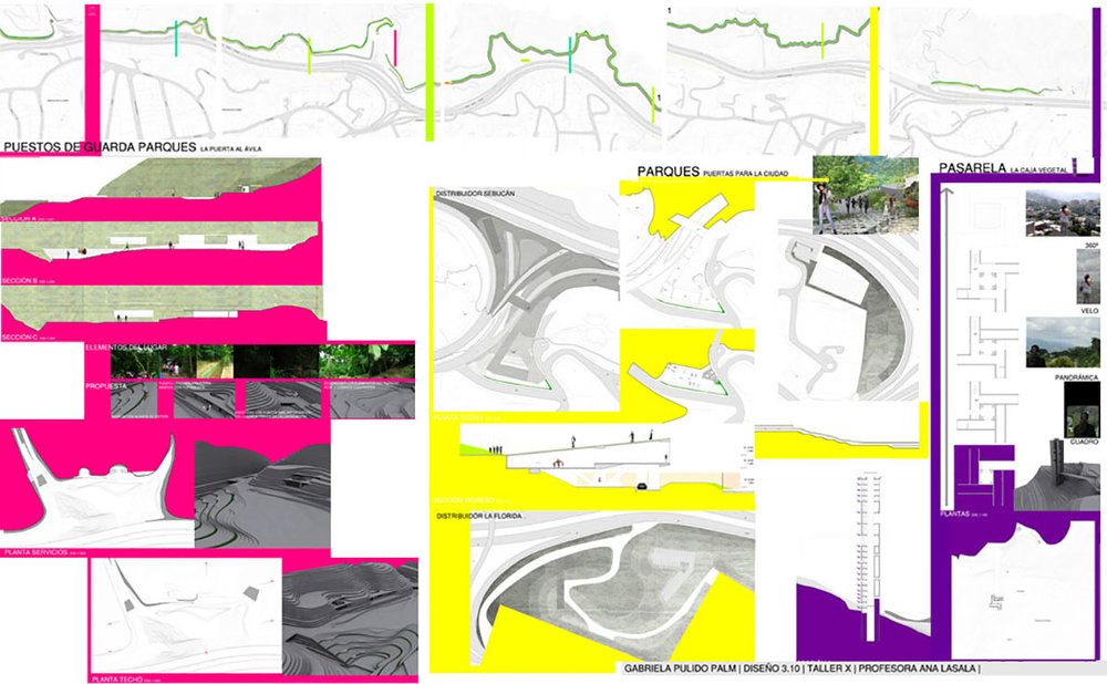 Lámina 3 3.10  II-2008 Gabriela Pulido Palm.jpg