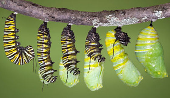 http://animals.howstuffworks.com/insects/caterpillar3.htm ©ISTOCKPHOTO/KATHY KEIFER