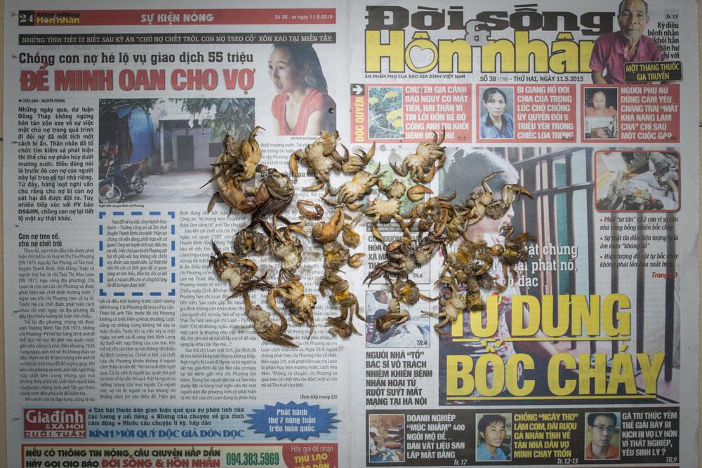 TPL_Vietnam2002.jpg
