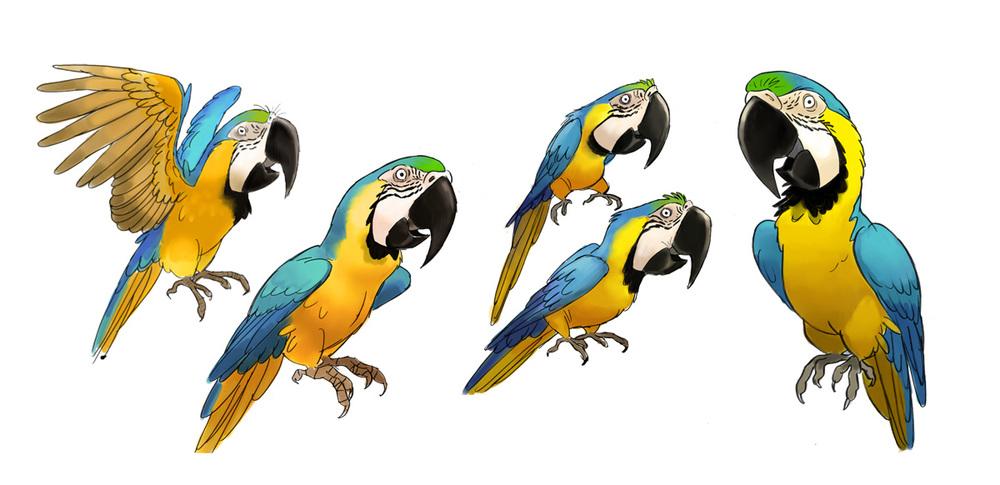 parrots1.jpg