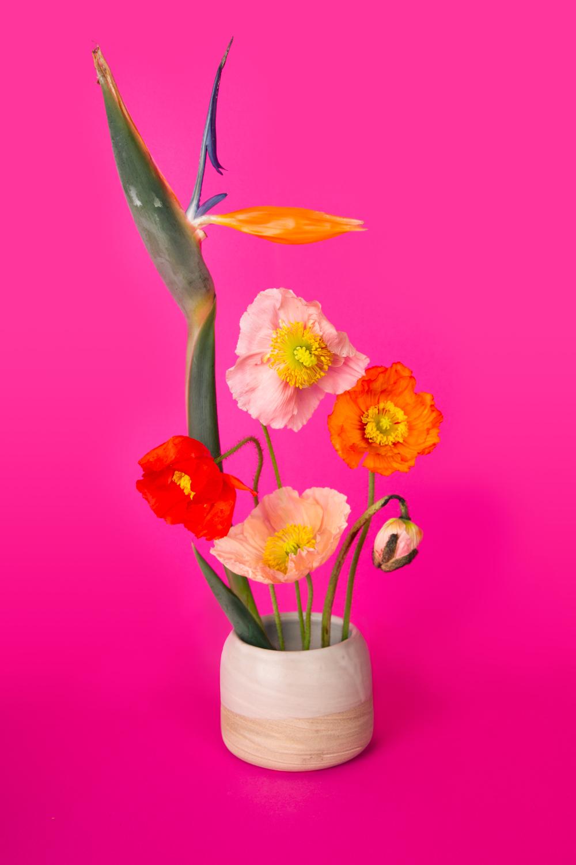 Pink-1500px-blended.jpg