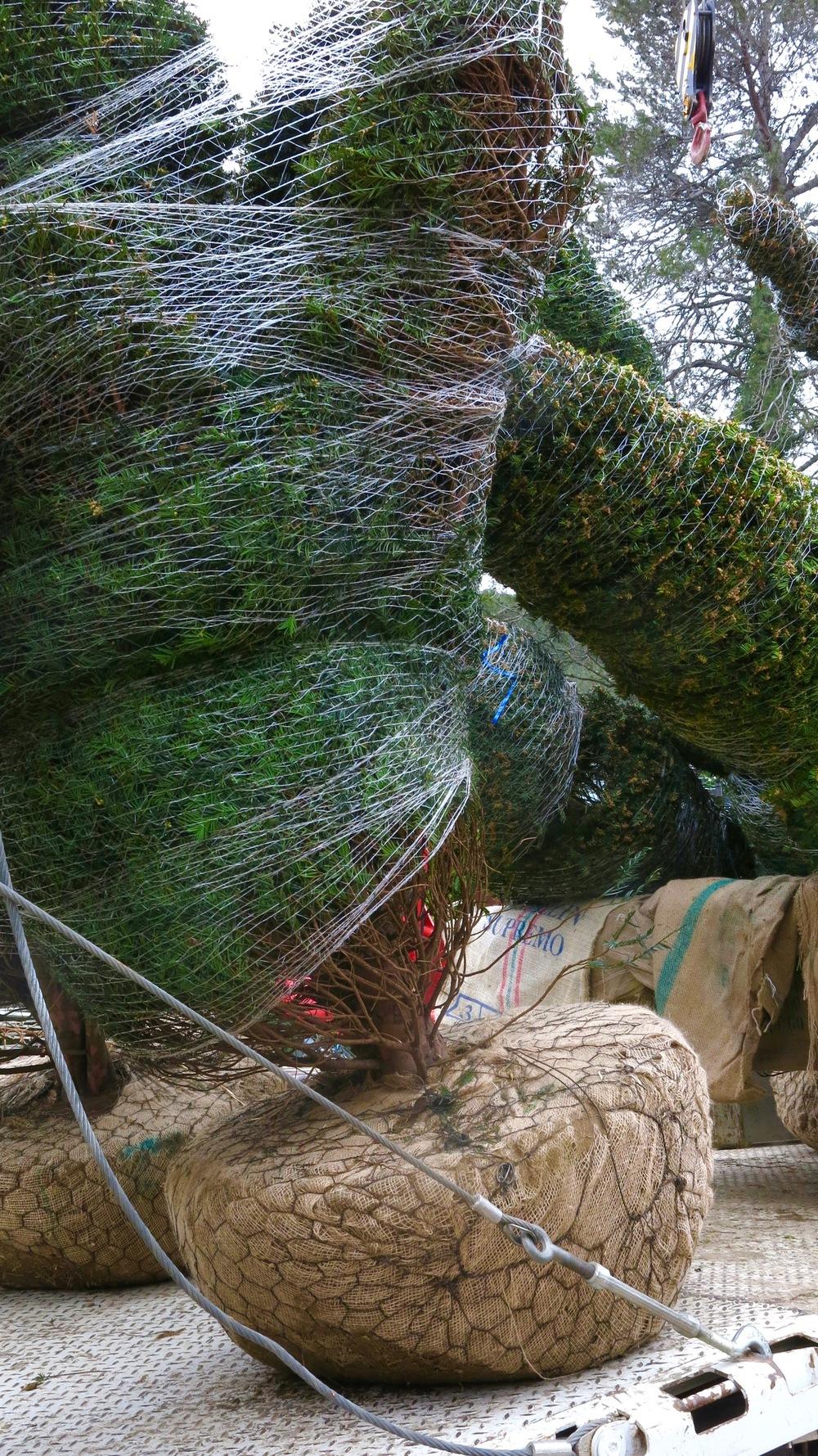 Mas de Bienvenue topiary.jpg