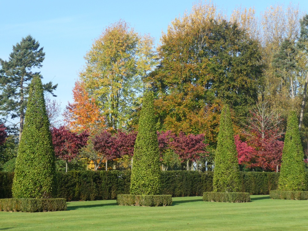 Little Barrow Hornbeam topiary.jpg