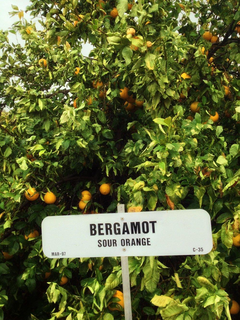 BergamotSourOrange.jpg