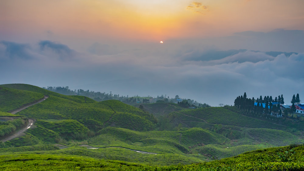 Imagine yourself here in Ilam at 6000-7000ft altitude as you sip on our tea of the month!